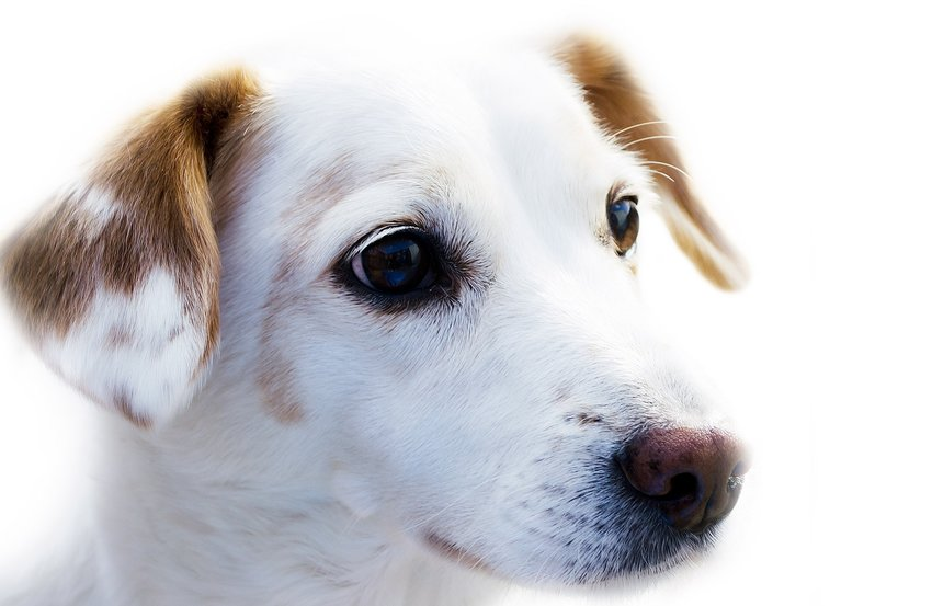 Pes Do Bytu: 12 psov vhodných pre život v byte a v apartmáne